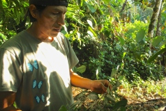 "Benjamin Alvaro holding ""small coca,"" a variety of the coca leaf that's used mainly in teas as an energizer. (Photo: KB)"