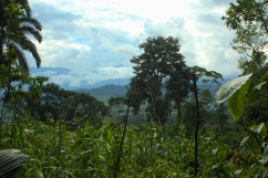 A view of the rainforest from Tama Yuria, in the province of Napo, Ecuador. (Photo: KB)