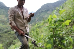 Jorge talks to me while harvesting coca in his small crop, just outside Madrigal.